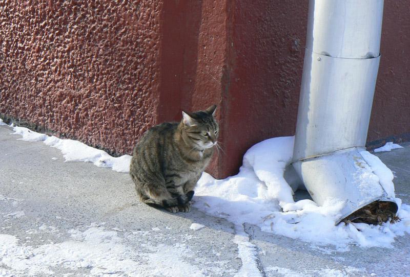 Кот в ожидании весны. Академгородок. Новосибирск. Зима 2012