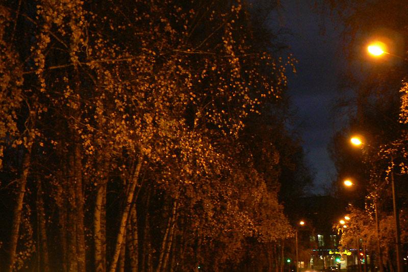 Осенний вечер в Новосибирском Академгородке