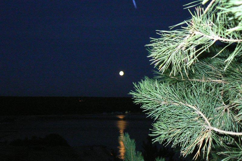 Осенняя Луна сосну рисует тушью на синих небесах