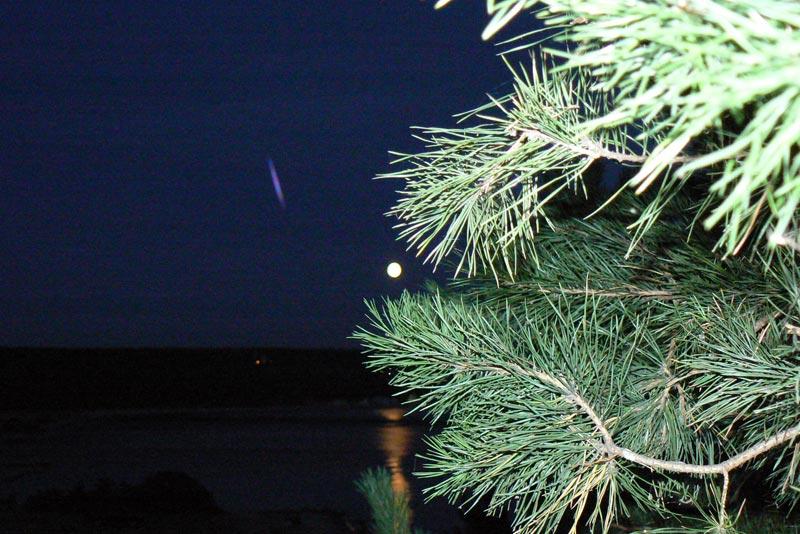 Луна и ветки