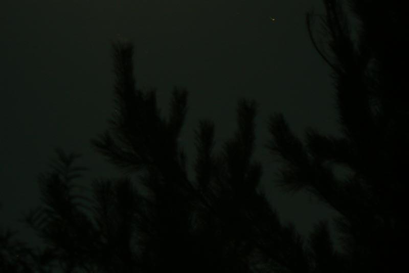 Тень сосны на ночном небе