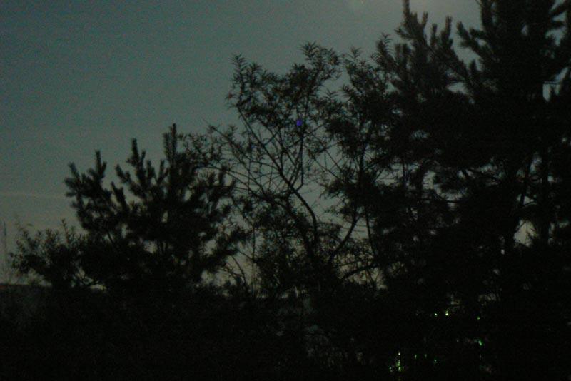 Деревья под Луной