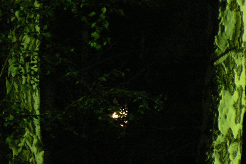 Ночная съемка. Луна и Береза
