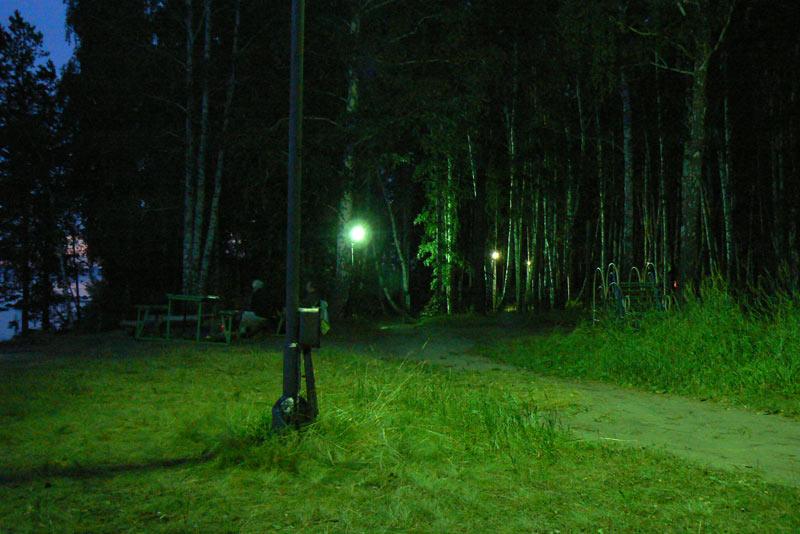 Ночная съемка. Сказочный лес