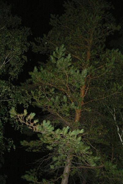 Ночная съемка. Деревья